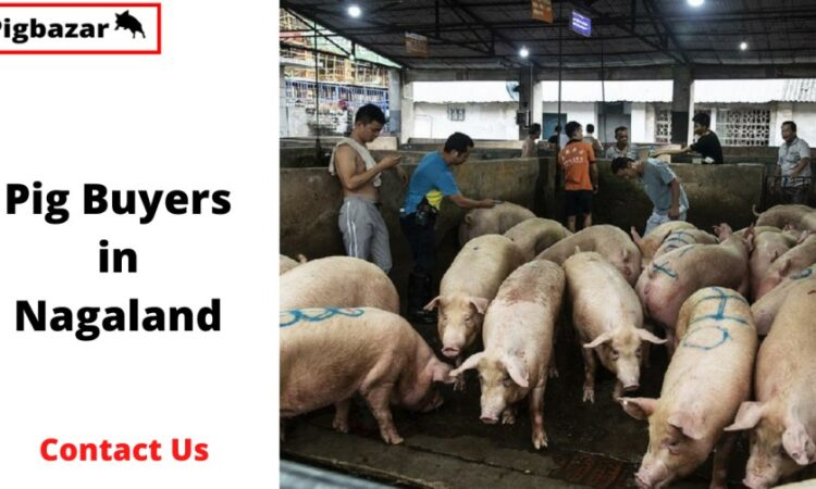 pig buyers in nagaland